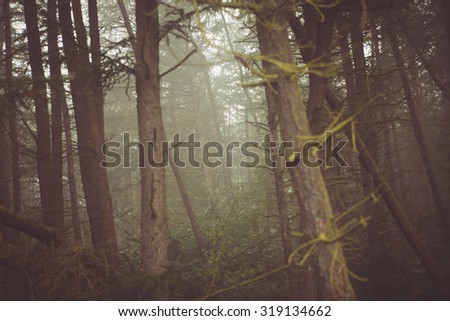 Trees inside a dense foggy forest