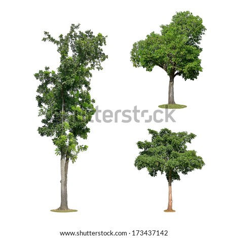 Trees isolated on white - stock photo