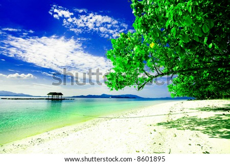 Trees leaning out over perfect Asian beach