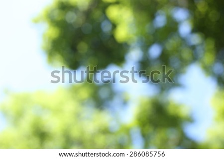 Trees, leaves, summer. The green of the trees. Background, texture, abstract. The sunlight and the leaves of the tree. Nature, summer, lush foliage. The wind in the leaves. - stock photo