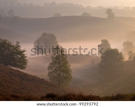Trees look like silhouettes in a hilly misty landscape during sunrise