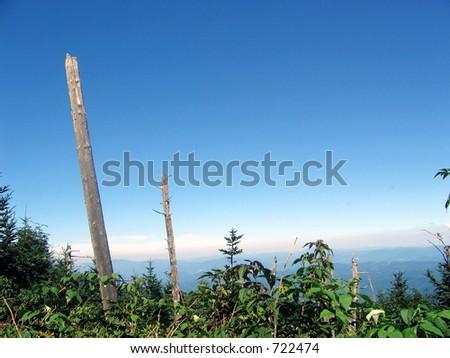 trees near the edge of mount mitchell - stock photo