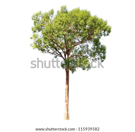Trees on a white background. - stock photo