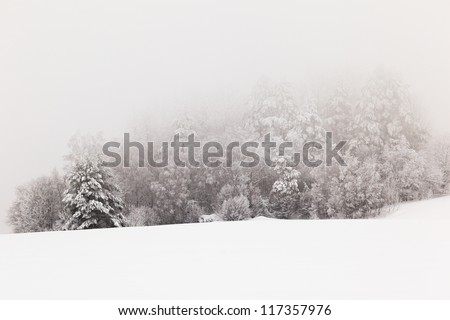 Trees on a winter snow-covered field - stock photo