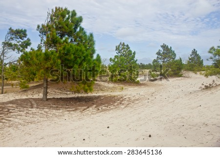 Trees on Dunes park at Tramandai/Cidreira - Rio Grande do Sul - Brazil - stock photo