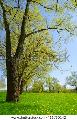 Trees on meadow. Spring landscape. - stock photo