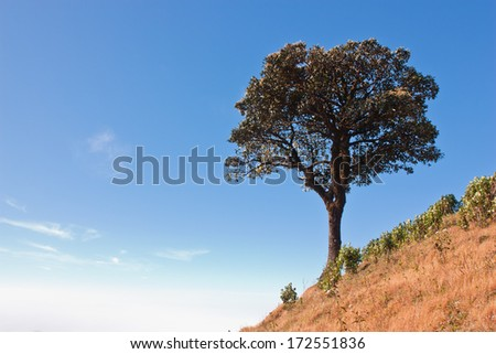 Trees on Mountainside