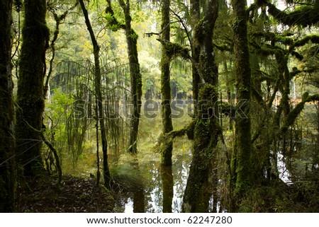 Trees on shoreline of swamp - stock photo