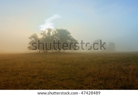 Trees on the meadow with sun and foggy