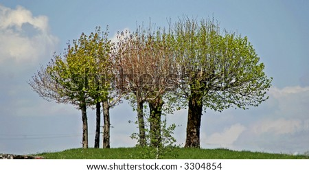 trees on top of a hill