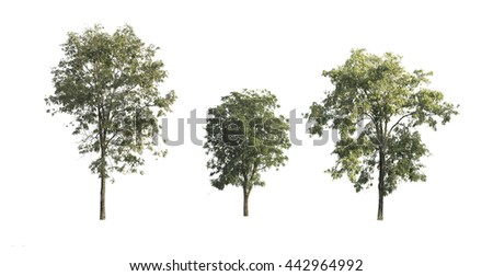 Trees on white background - stock photo