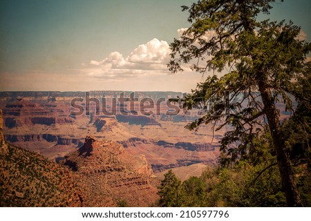 Trees Over the Grand Canyon, Grand Canyon National Park, Arizona - stock photo