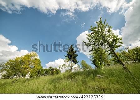 trees photographed from below the hill below the clouds - stock photo