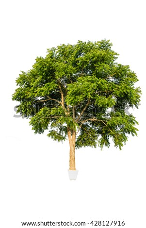 Trees plant in a  small flowerpot isolate on white background  - stock photo