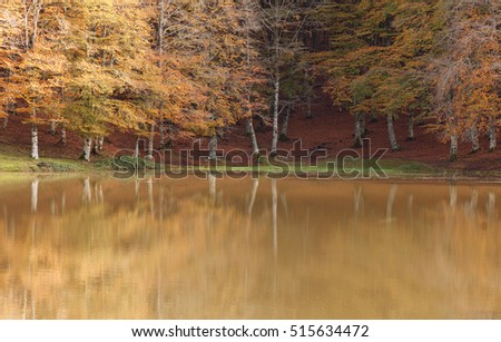 Trees reflected in a lake during fall.