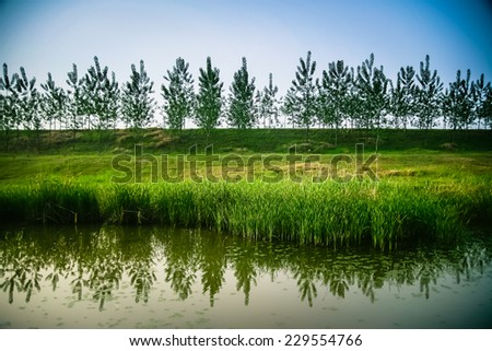trees reflected in the river in the countryside - stock photo