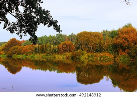 Trees reflection in a river on a sunny autumn day