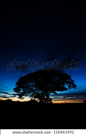 trees silhouette at sunset - stock photo