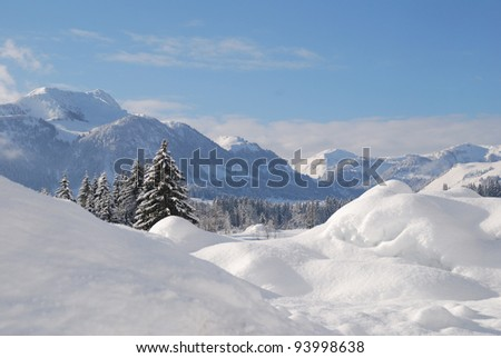 Trees snow covered in austrian winter landscape