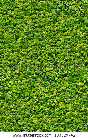 Trees topview forest seamless texture - stock photo