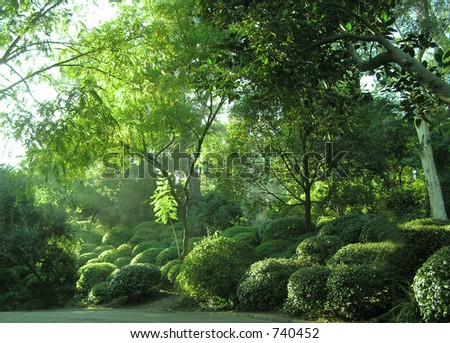 Trees, Trees, and More Trees - stock photo