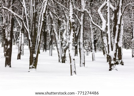 trees trunks covered with snow in winter park after heavy snowfall