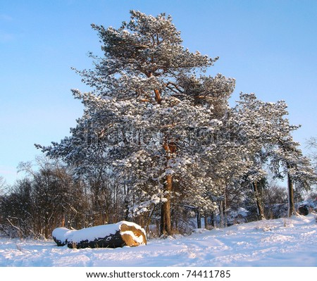 Trees under a snow in city park - stock photo