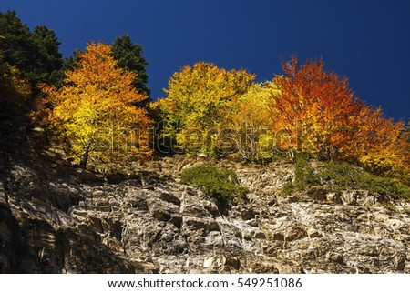 trees with autumn colored leaves on the rocks