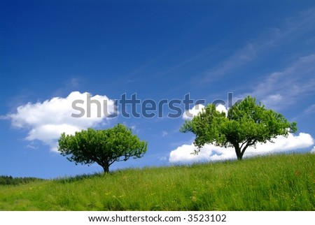 trees with clouds and blue sky