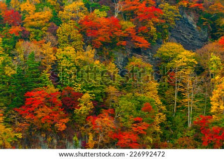 Trees with colorful leaves during Autumn