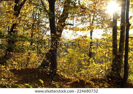 Trees with green and yellow leaves in the wood