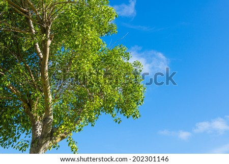 Trees with sky background - stock photo