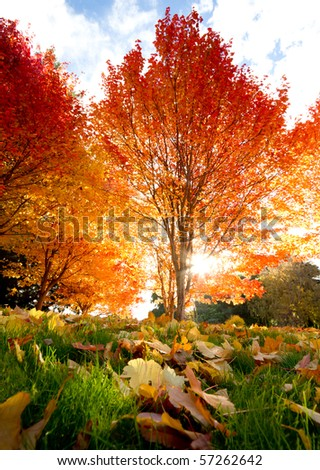Trees with sunbeam - stock photo