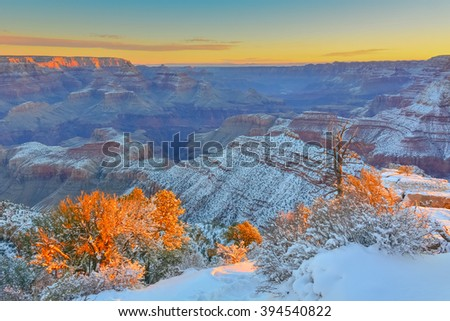 Trees with sunrise light in Grand Canyon National Park, USA.  Orange sky in the background.  It was taken during the winter.  Grand Canyon National Park is one of the world's natural wonders - stock photo