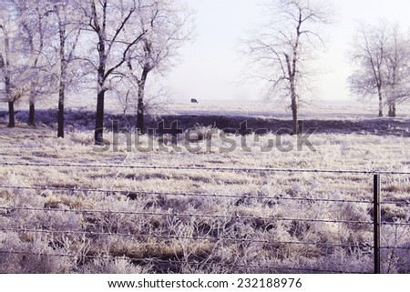Trees with winter frost and ice - stock photo