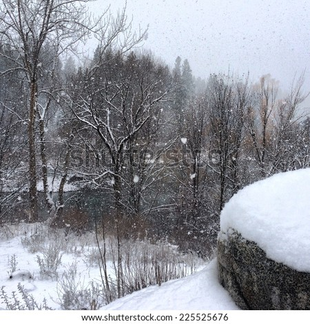 Trees without leaves and a rocky outcrop in a snow storm. - stock photo