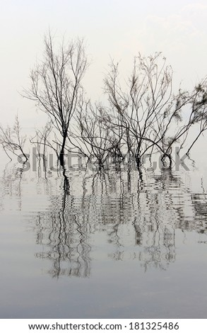trees without leaves reflected in the water of the lake Kinneret, Israel - stock photo