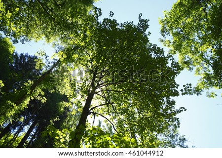 treetops in a Wood,  Germany, Europe