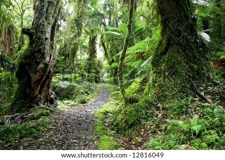 Trekking in Green paradise. Hollyford valley. South Island. New Zealand