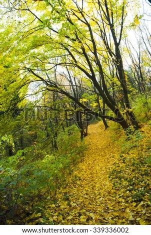 trekking path at autumn forest - stock photo