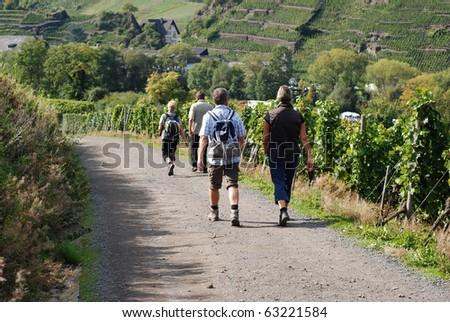 Trekking through the vineyards near Mayschoss - stock photo