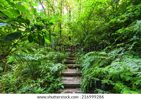 Trekking trail leading through jungle landscape of deep tropical rain forest. Travel background at Doi Inthanon Park, Thailand - stock photo