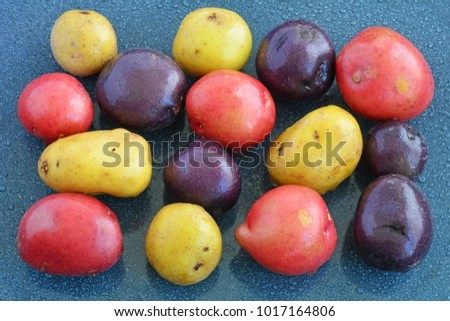 Tri-color mini potatoes on blue enamel tray in horizontal format and shot in natural light