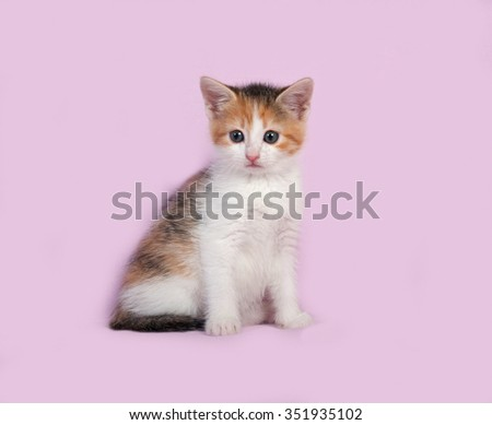 Tricolor kitten sitting on pink background