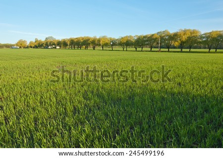 Tries and grass in spring morning - stock photo