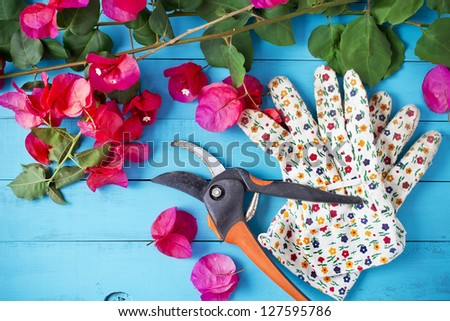 Trimmed branches and green leaves with gardening gloves and scissors on blue table - stock photo