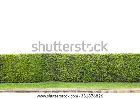 trimmed shrub fence isolated on white with clipping path - stock photo