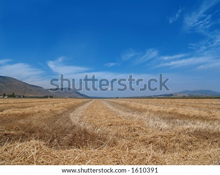 trimmed wheat field withe blue cloudy sky - stock photo