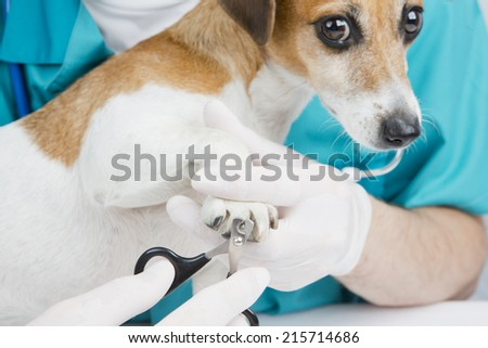 Trimming claws. Manicure and pedicure grooming. dog at a reception at the vet. Horizontal - stock photo