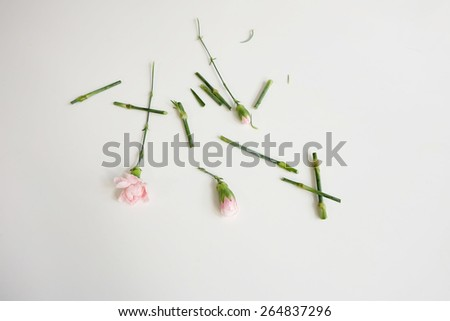 Trims on pink carnations on white